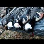 duck32